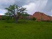 Red Rocks & Spring Rain