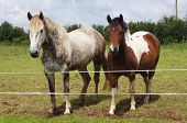 Caballo y Pony