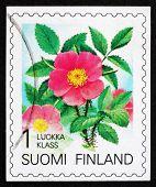Postage stamp Finland 1994 Karelian Rose, Flower