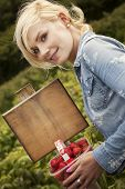 Attractive blonde woman holding up large a ripe red strawberry in her fingers from a punnet full tha