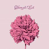 Beautiful, pink flower, greeting card.