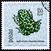 Postage stamp Poland 1963 Green Toad, Amphibian