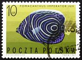 Postage stamp Poland 1967 Imperial Angelfish, Tropical Fish