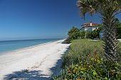 Beach_house_palm