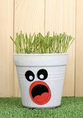 A pot of grass on wooden background