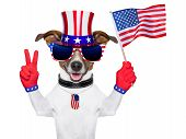 USA American Dog