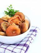Marinated Saffron Milk Cap Mushrooms