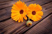 Flor de caléndula en mesa de madera