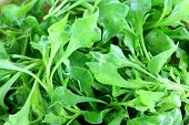 Closeup photo of Fresh Watercress (Nasturtium officinale)