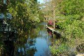 Suwannee River Canal 2