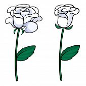 Illustration of the two white roses on a white background