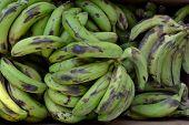 Green bananas Texture
