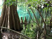 Manatee Springs, Florida