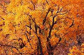 pic of fall trees  - fall colors - JPG