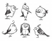 Funny cartoon birds, hand drawn