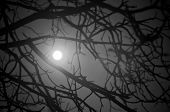 Mystery Night Background With Moon Saw Among Branches