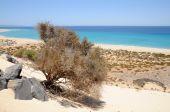 Playa De Sotavento, Canary Island Fuerteventura