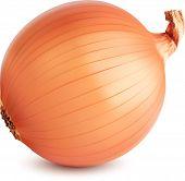 Onion Ripe isolated. Vector illustration