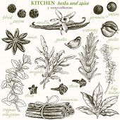 pic of bay leaf  - Kitchen herbs and spice - JPG