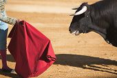 stock photo of bullfighting  - Bullfighter with the Cape in the Bullfight, Spain