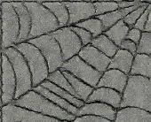 Spiderweb from the cracks. Asphalt