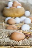 image of hen house  - Fresh free range eggs on a stand in the hen house - JPG