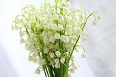 Beautiful lilies of the valley on cloth background