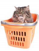 Cat Sitting In Shopping Basket