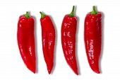 picture of chillies  - Four whole fresh red hot chilli peppers for a spicy cooking ingredient covered in tiny water droplets arranged in a line on a white background - JPG