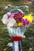 Bicycle with flowers in metal basket  in shadow on grass background