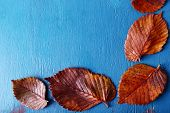 Autumn leaves on blue wooden background