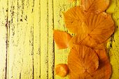 Autumn leaves on yellow wooden background