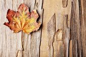 Beautiful autumn leaf on wooden background