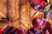 Bright leaves on brown wooden background