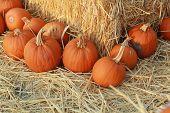 pumpkins at an angle around hay