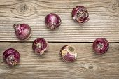 abstract of hyacinth bulbs ready for planting in a fall, rustic grained wood background