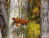 toadstool on wood