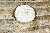 White Concrete  Decorative Stone Like As Tree Cross Section