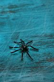 Cobweb with spider on wooden background