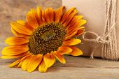 Sunflowers with present box on wooden background