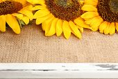 Beautiful sunflowers on frame close up
