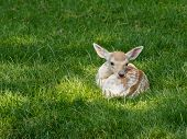 stock photo of bambi  - Young newborn deer lying peacefully in a meadow
