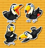 illustration of a set of four toucans