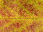 leaf fall colors texture