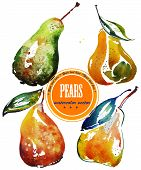 Set of different ripe pears,  watercolor sketch
