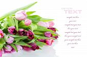 stock photo of flower arrangement  - Pink tulips on white background - JPG