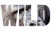 Word Wild Face Portrait Of A Gorilla Male