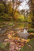 River Blyth In Autumn Vertical