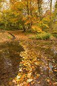 Autumn Leaves In Burn Vertical