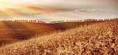 Beautiful autumn landscape, dry golden wheat fields in mild sunset light, autumnal harvest season, countryside panorama, agriculture concept